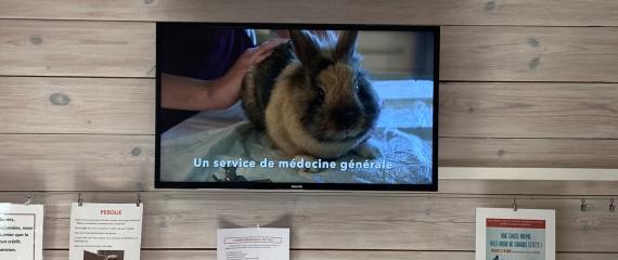 Ecrans vitrine et salle d'attente Cabinet vétérinaires - Charleroi
